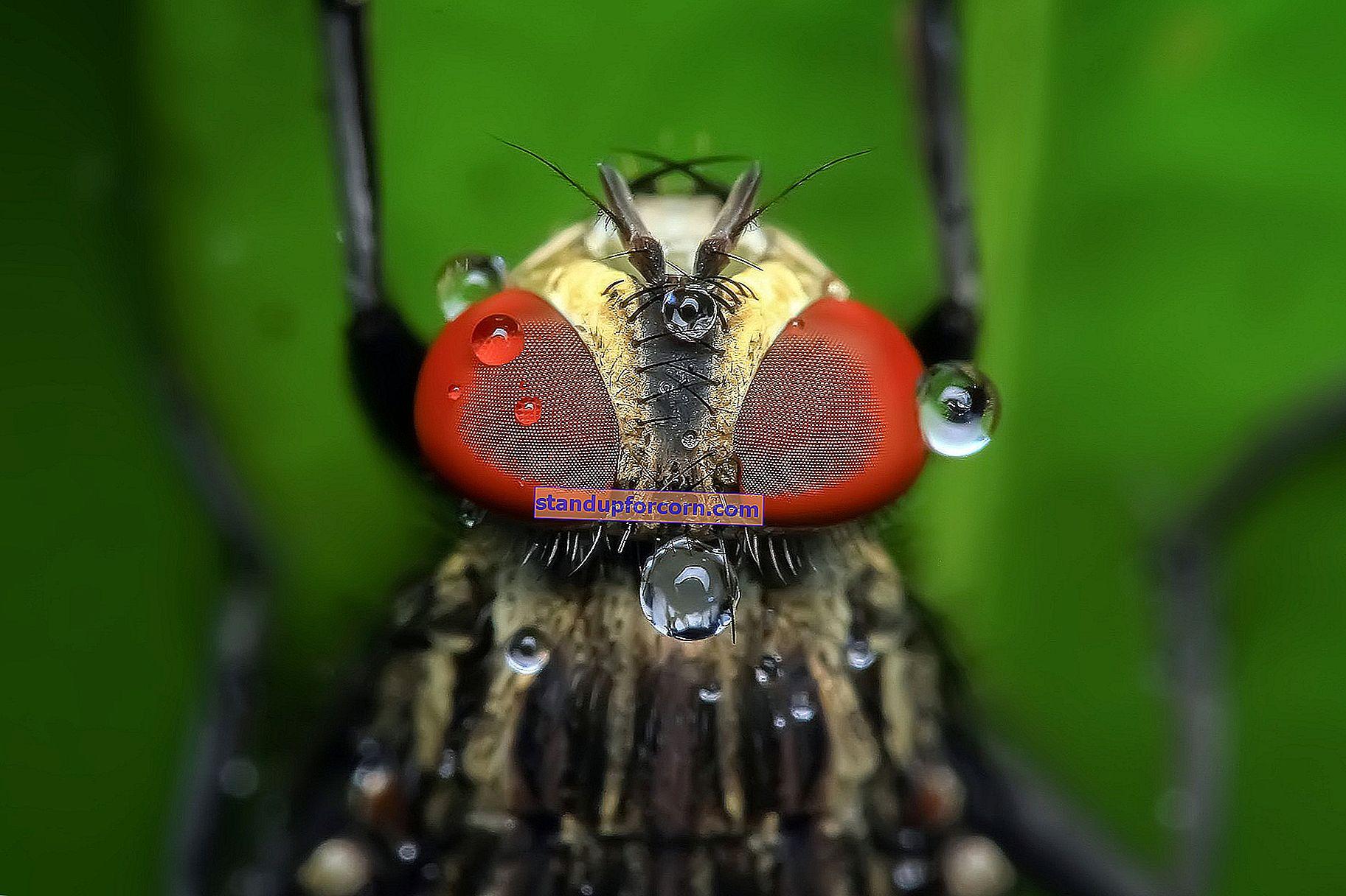 Ett sätt att hantera getingar och horneter. Hur bli av med en gång för alla?