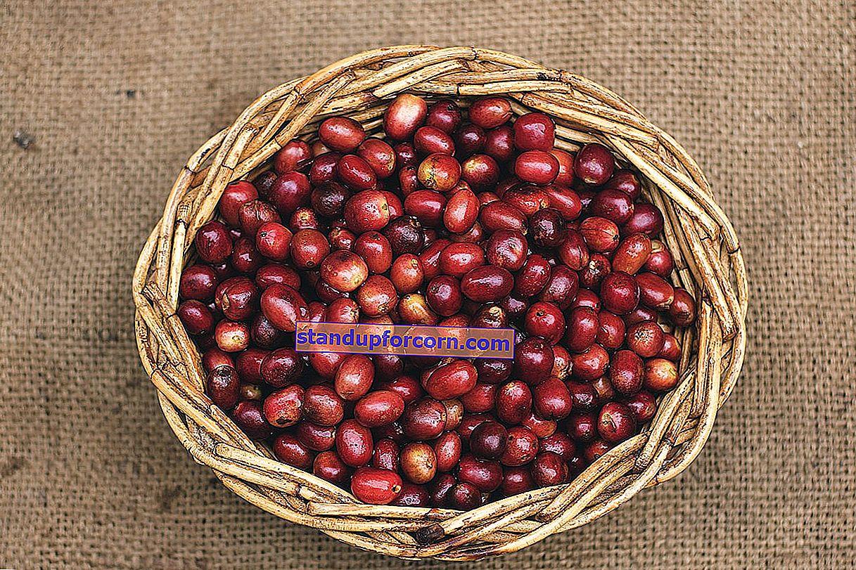Kávová usadenina ako hnojivo. Ako hnojiť rastliny kávovou usadeninou?