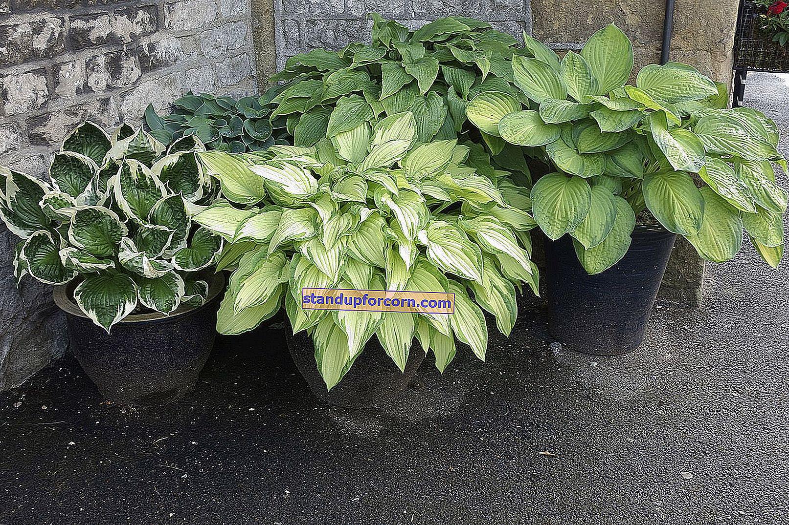 Φυτά μπαλκονιών όλο το χρόνο