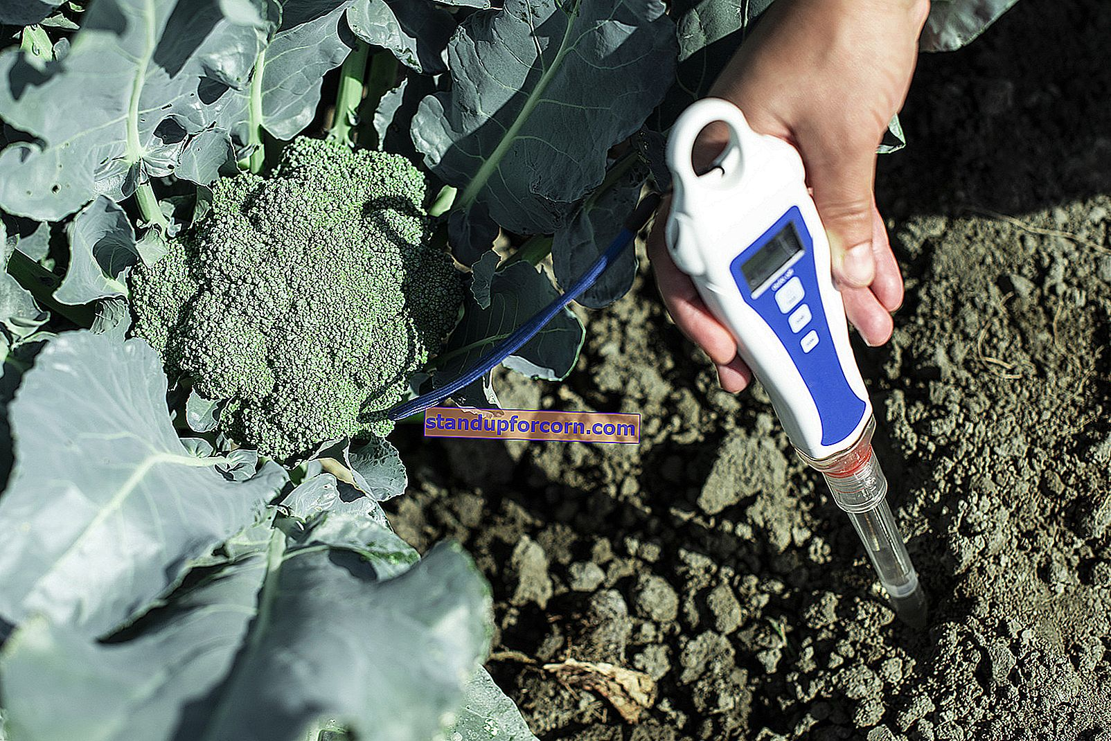 Toprak asitlenmesi. Bahçedeki toprağı nasıl ve neyle asitlendirirsiniz?