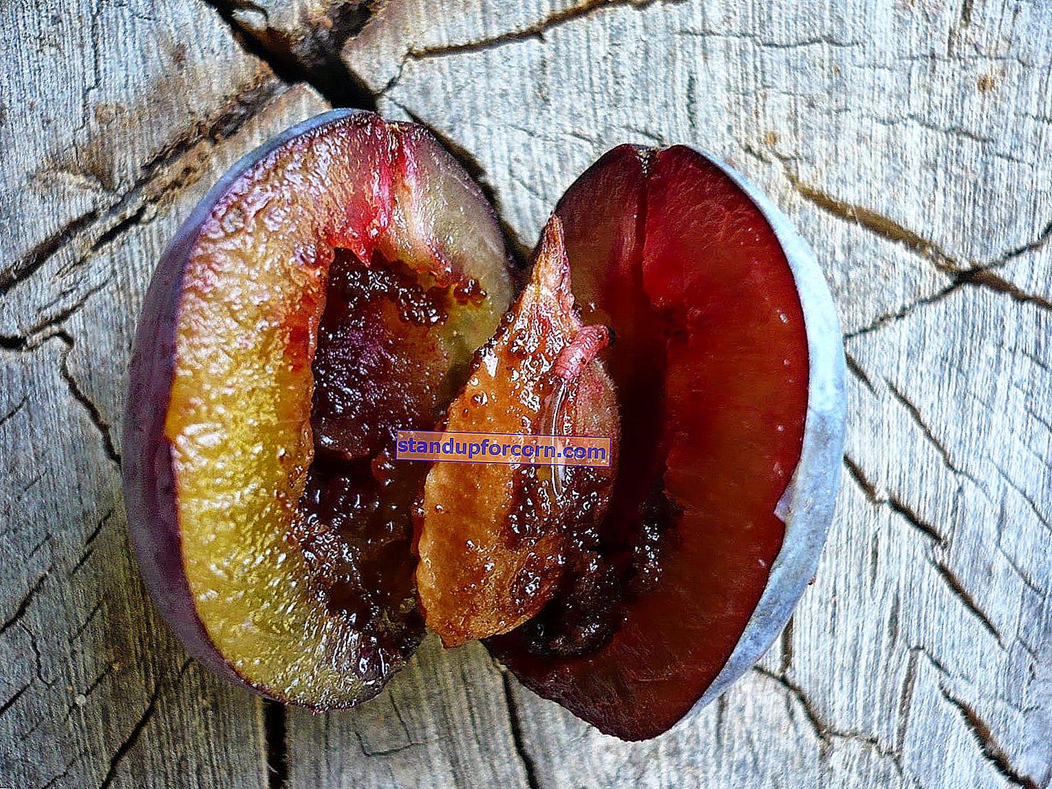Slivkové ovocie - boj, postrek červami v slivkách