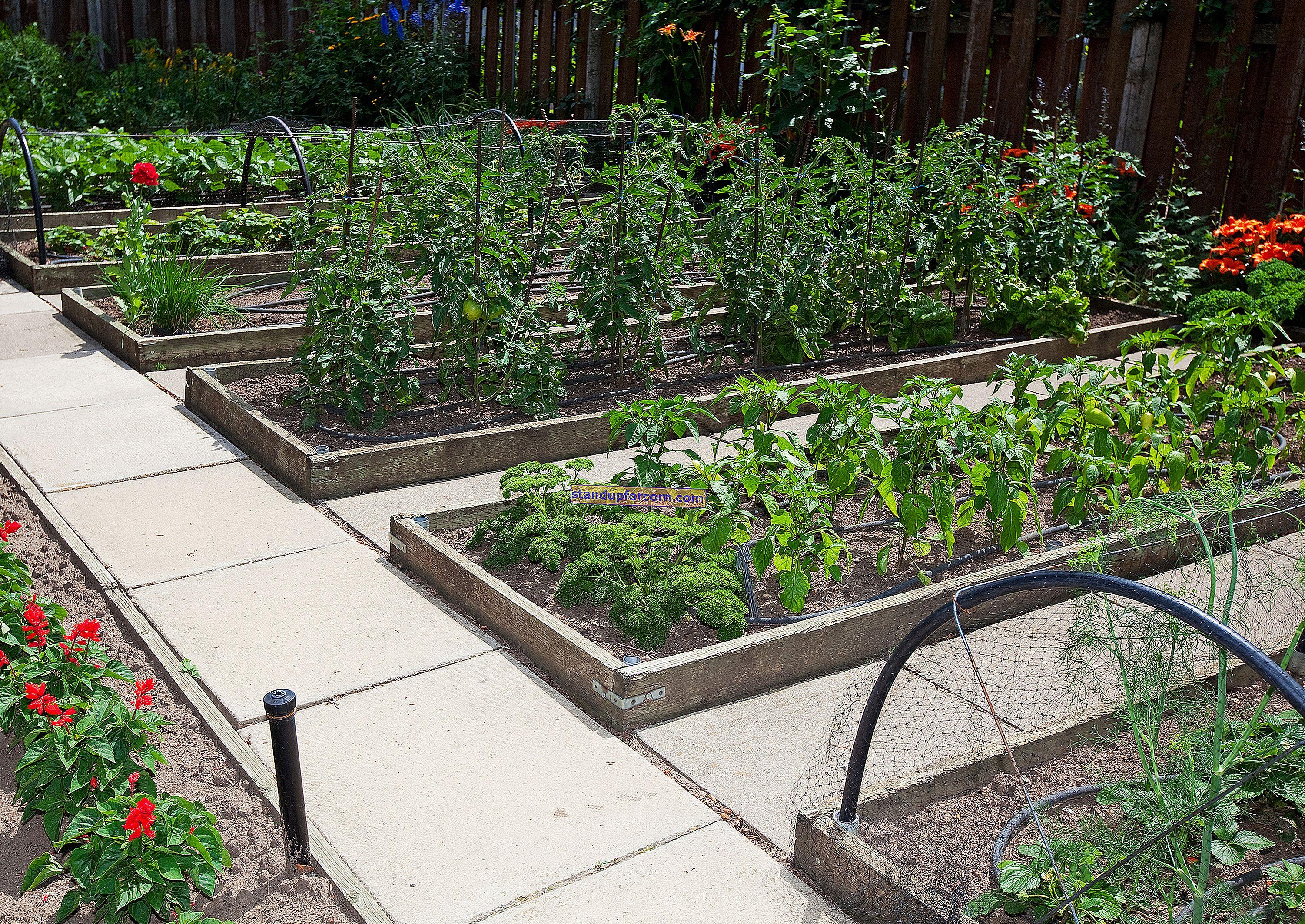 Φυτικός κήπος σε κιβώτια