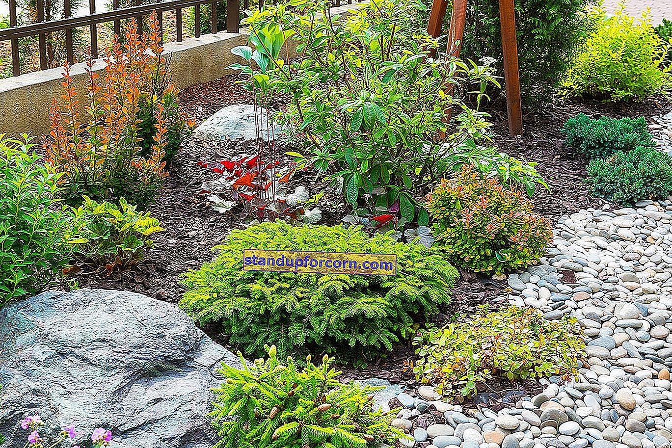 Πολυετή φυτά για rockery