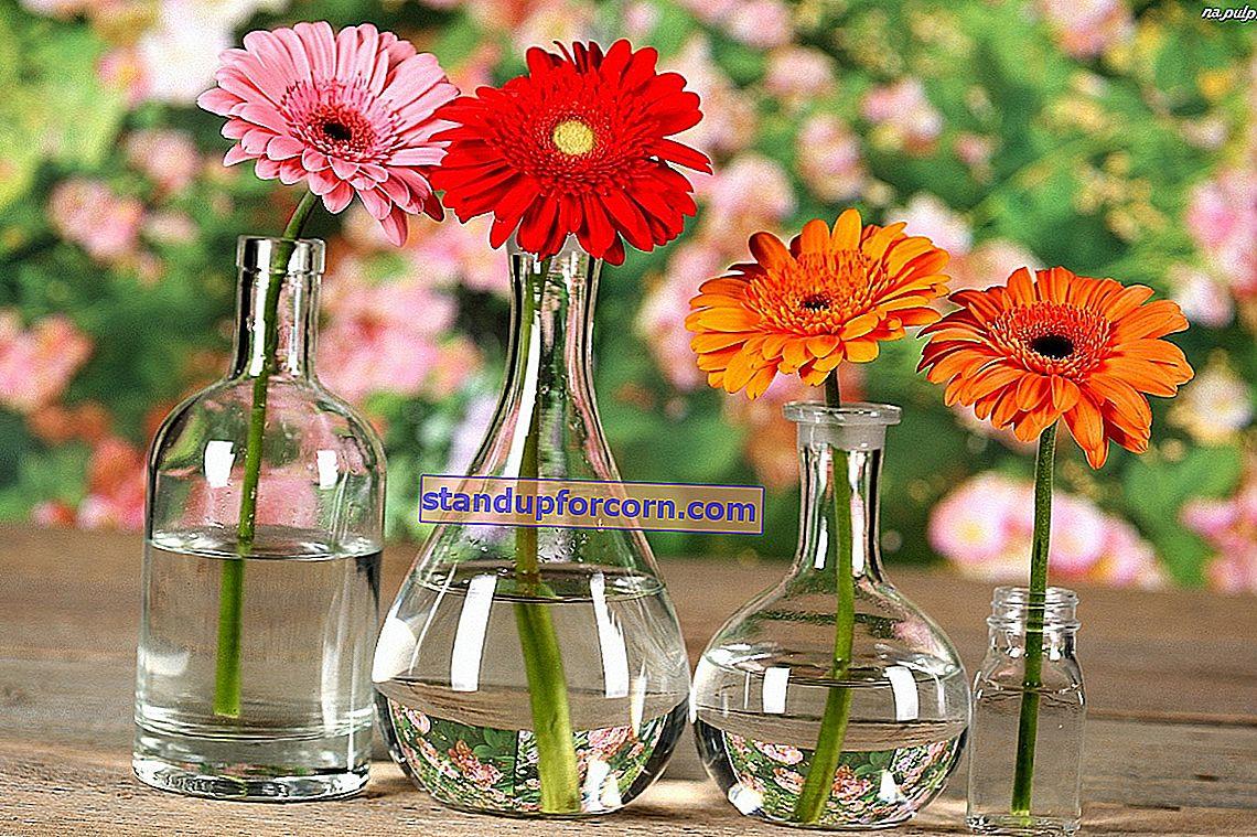 Güllerin vazoda daha uzun süre kalması için ne yapmalı?