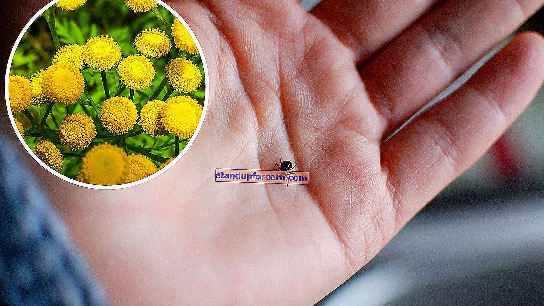 Planter, der afviser flåter