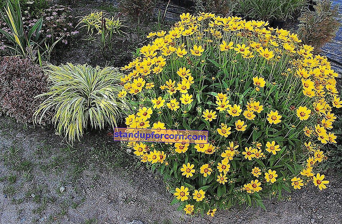 Langblomstrende blomster på stein