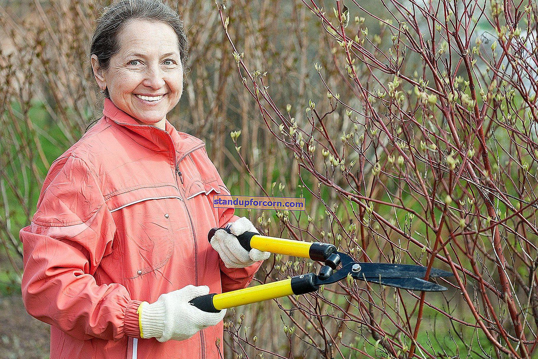 Meyve ağaçlarını ve çalıları kesmek