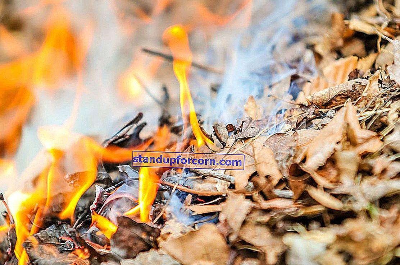 Brændende blade og grene på grunden. Forskrifter 2020