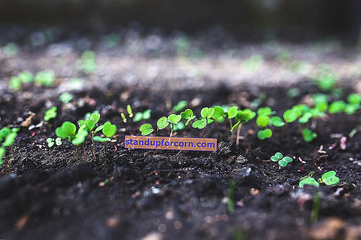 Nisan ayında ne ekiyoruz? Nisan için ekim takvimi