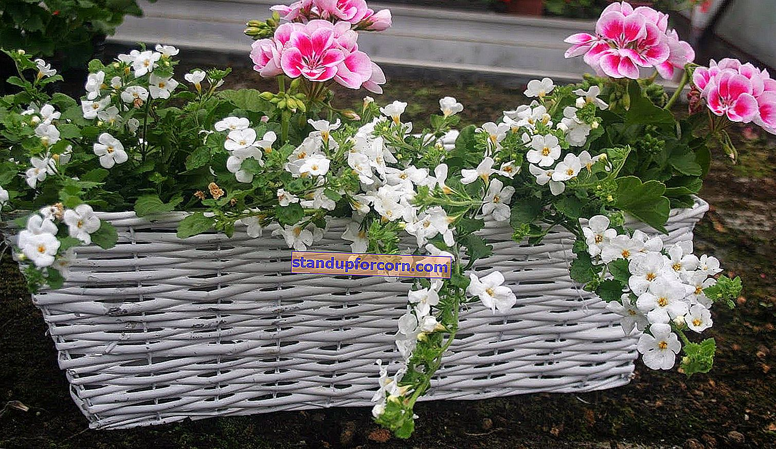 Blomsterarrangemang för balkongen. Exempel och foton!
