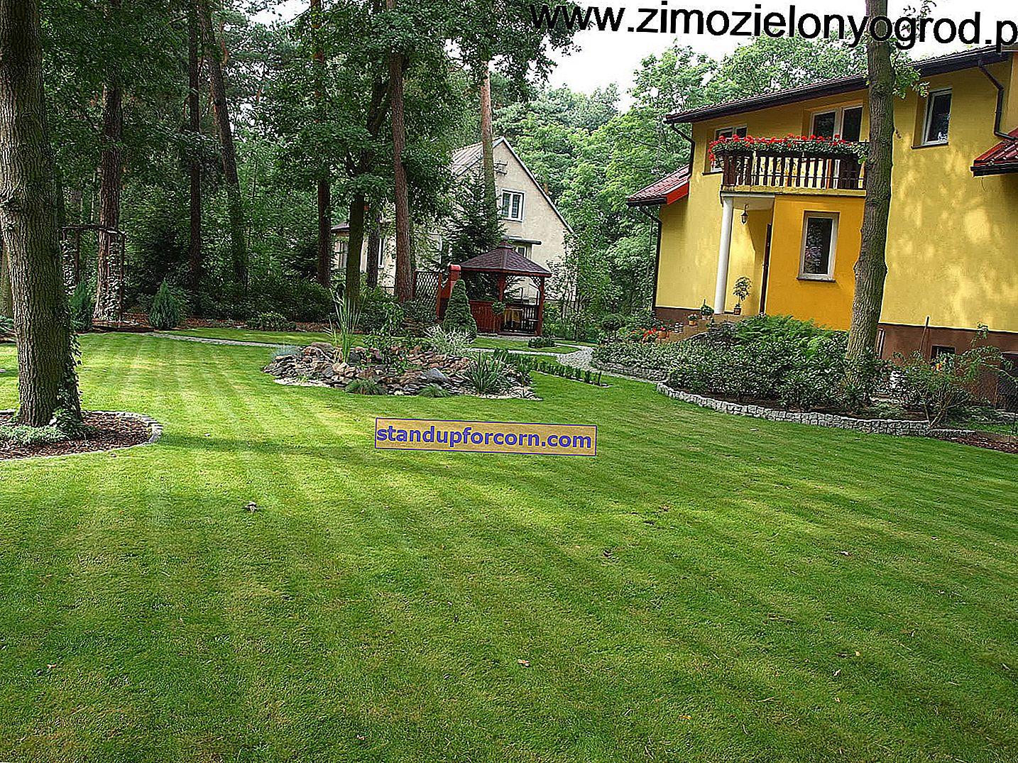 Den siste klippingen av gresset før vinteren. Når og i hvilken høyde?
