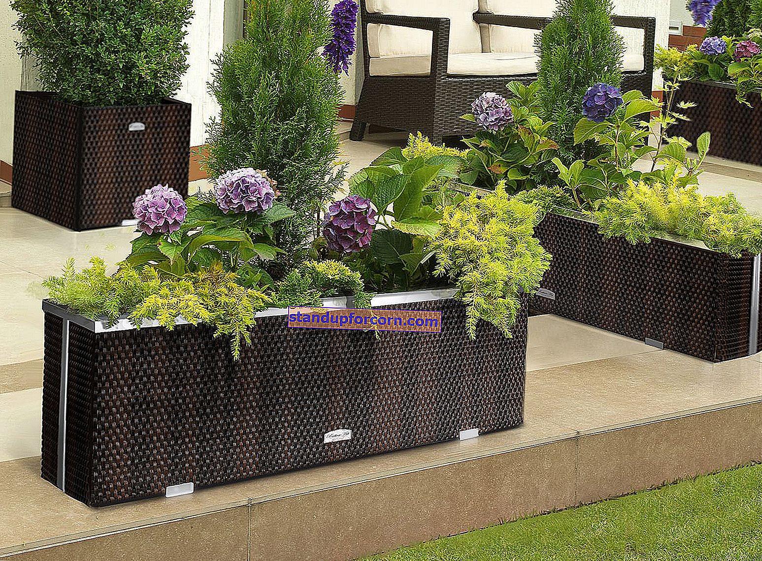Rastliny pre veľké záhradné kvetináče