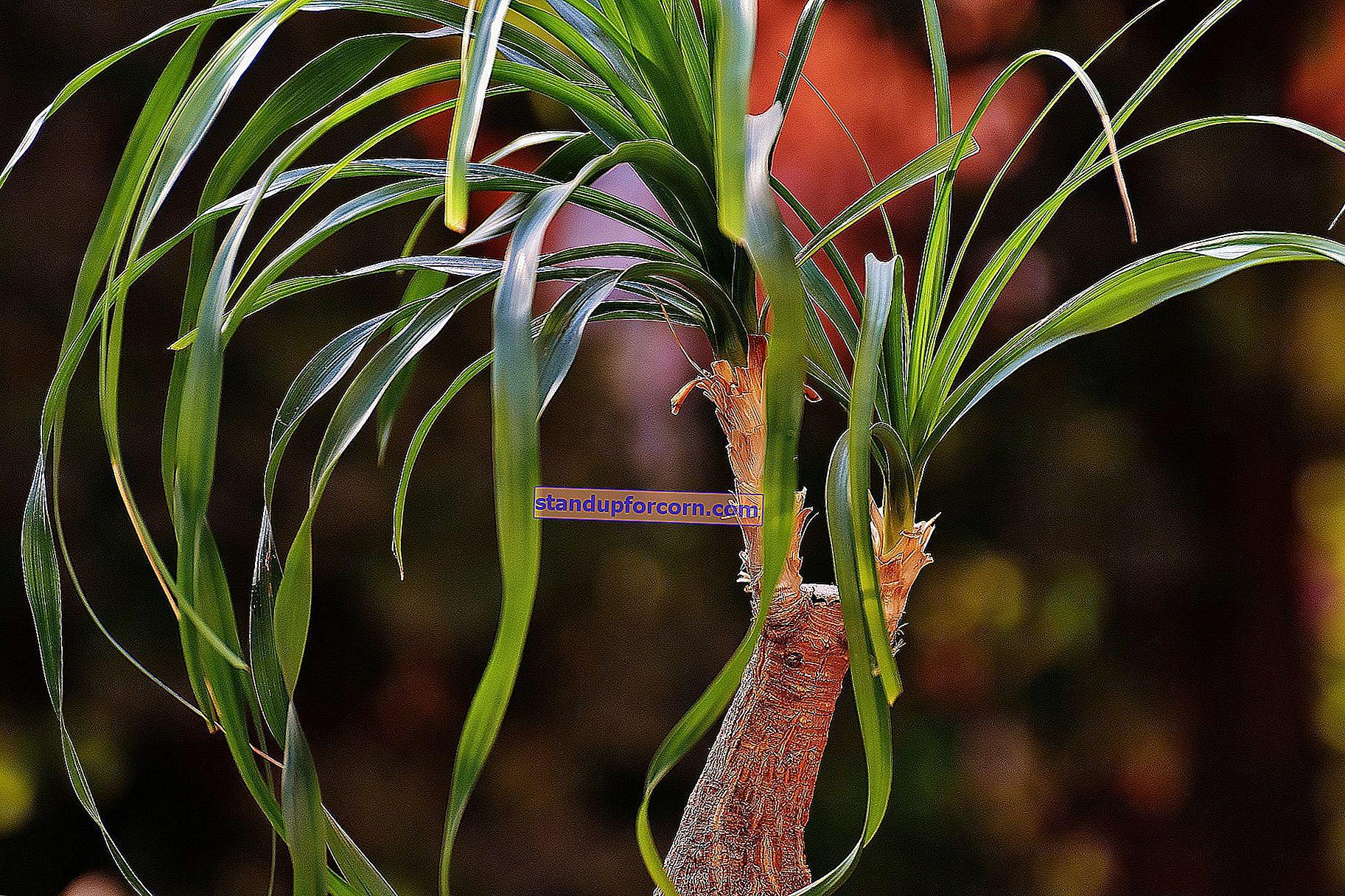 Kedi için güvenli saksı bitkileri