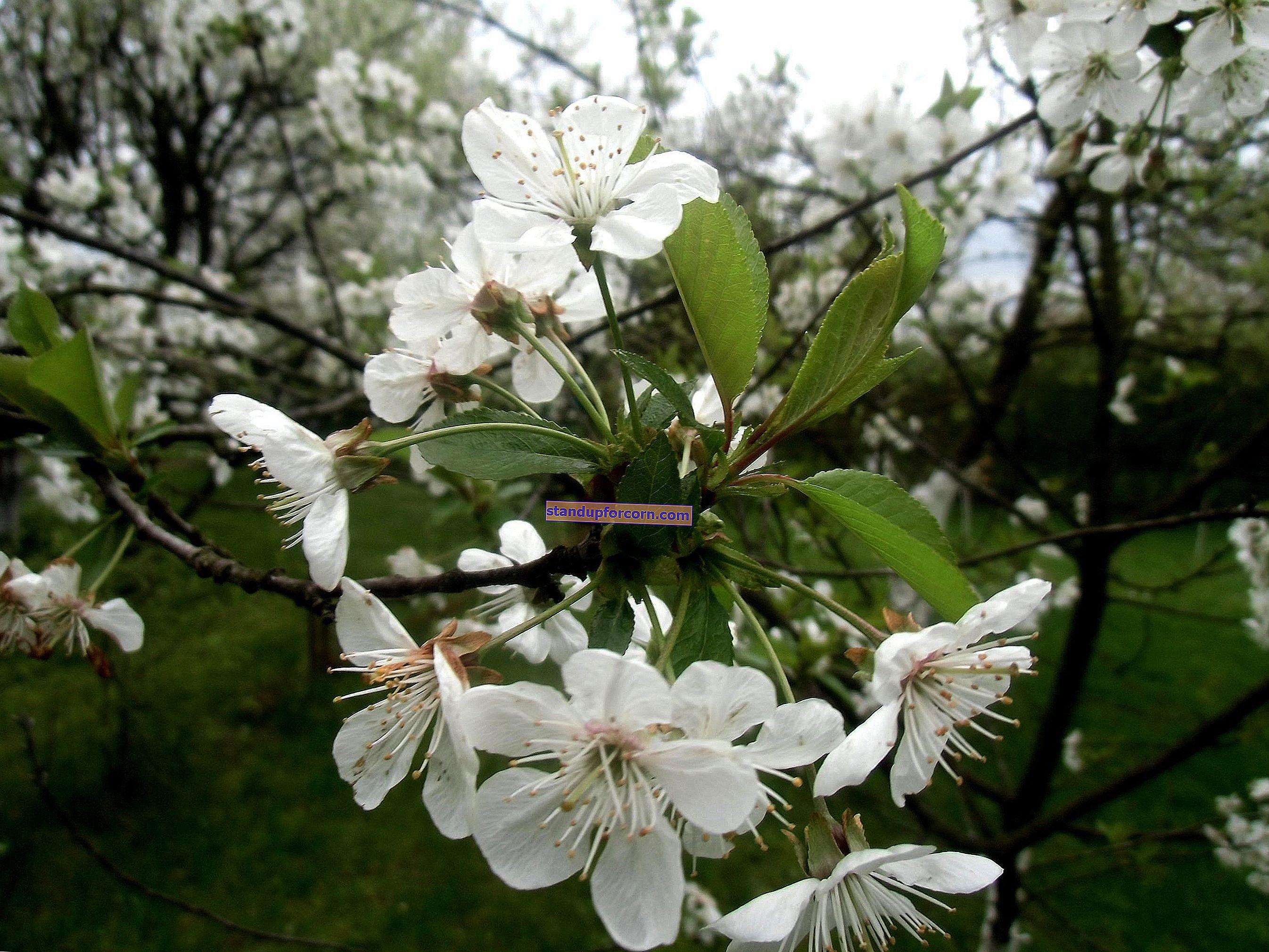 April i trädgården