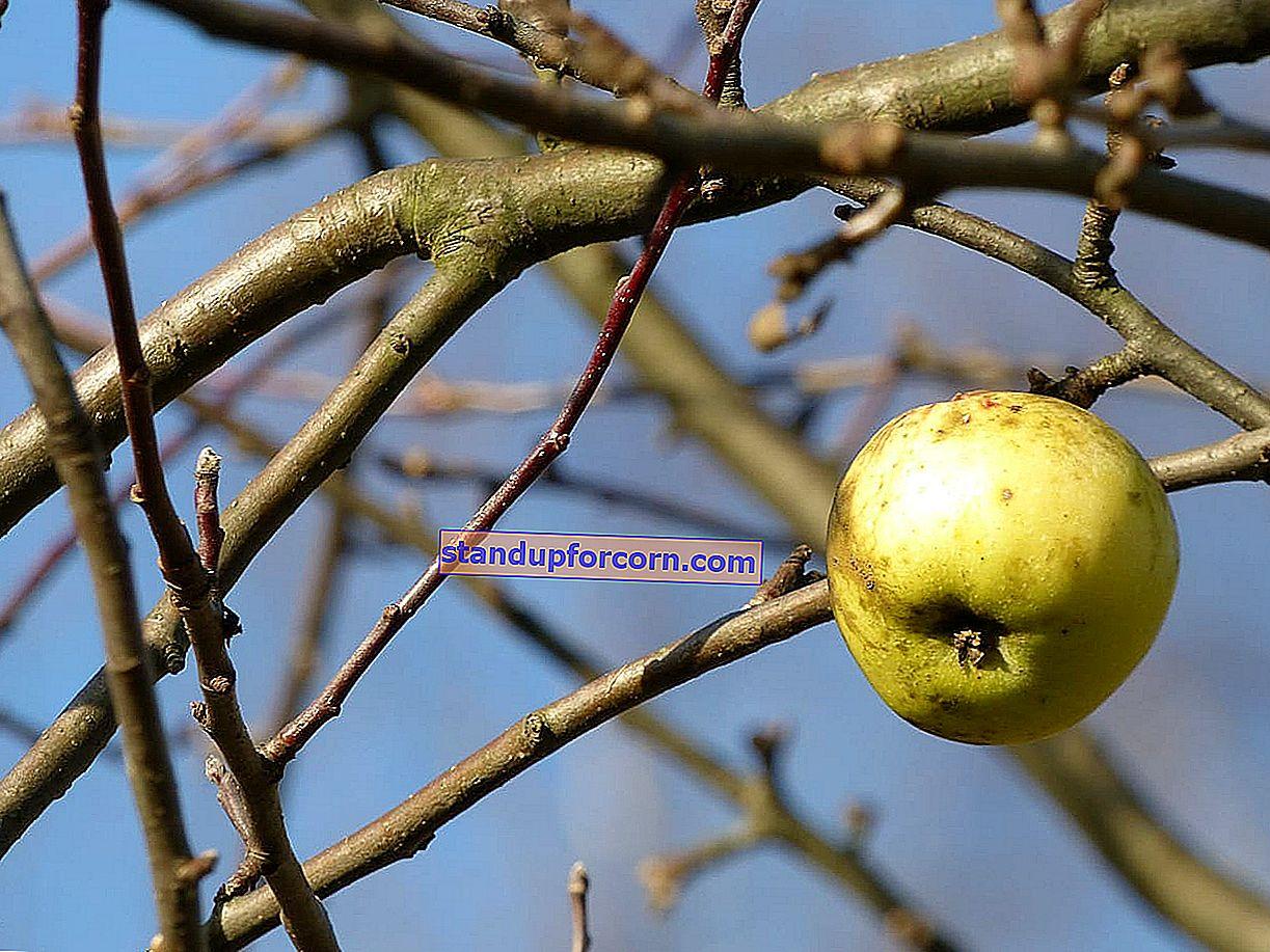 Meyve ağaçlarına sonbaharda ilaçlama