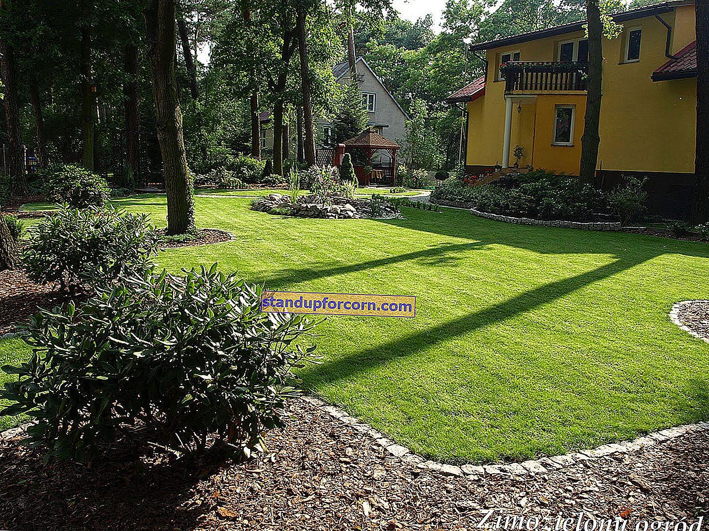 Kalkning av gräsmattan. Hur och när ska gräsmattan kalkas?