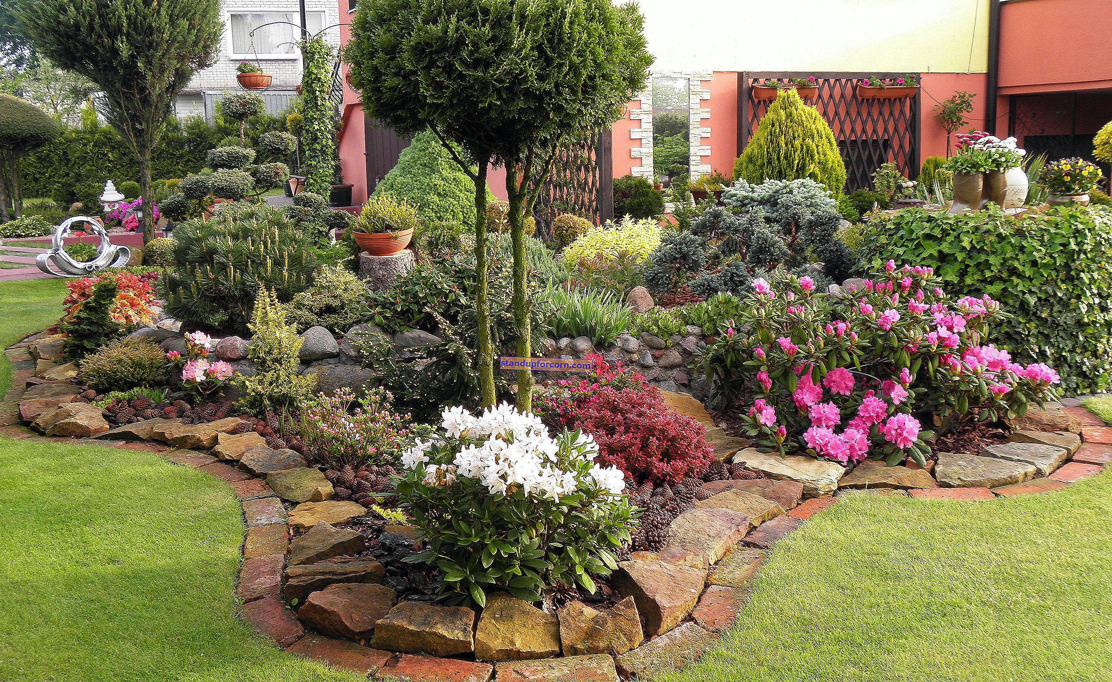 Bahçede taş döşeli - taş döşeli bitkiler için nasıl yapılır